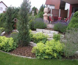 Pflanzung Frauenmantel Lavendell und Scheinzypresse